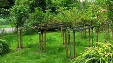 Johannisbeere Gartennatur