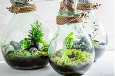 stunning live plants in a jar with self ecosystem stock