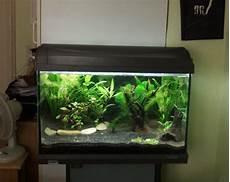 60 liter becken 60 liter aquarium fische 1000 aquarium ideas