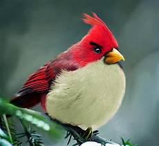 Gambar Asli Burung Angry Birds Kejawen Wetan