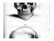 268 Gambar Tangkorak Skull Terbaik Di 2019 Tengkorak