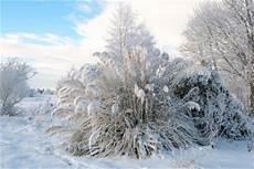 Gräser Im Winter - pasgras 252 berwintern so wird s gemacht