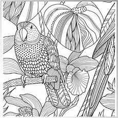 Ausmalbilder Erwachsene Papagei 4201 Zencolor Ausmalvorlage Jpg 2050 215 2050 Ausmalbilder