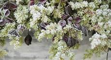 pflanzen im winter richtig gie 223 en stilnote gartenblog