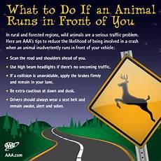 wildlife topics wildlife crossing aaa s tips to avoid animal vehicle collisions