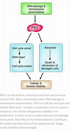 the role of apoptosis in cancer progression nerdynaut