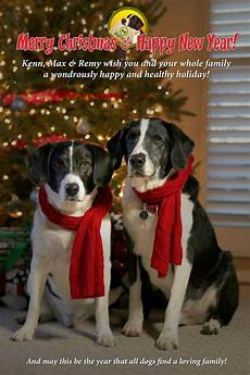 merry christmas from dog files dog files