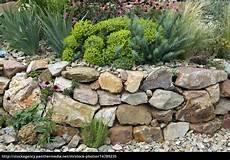 bepflanzung vor einer mauer steingarten trockenmauer fuenf monate nach stockfoto
