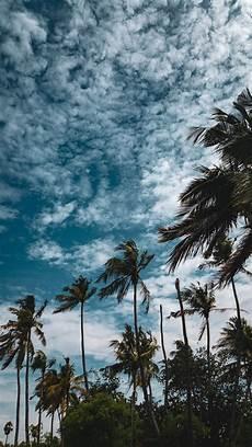 Gambar Pohon Kelapa Siang Hari Pemandangan Fotografi