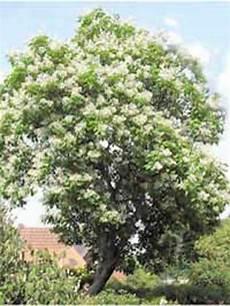 Schnellwachsender Baum Als Sichtschutz Gesucht Was