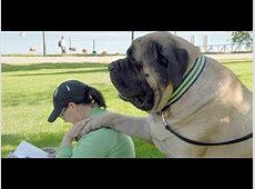 A Z Dog photos (part 1)   YouTube