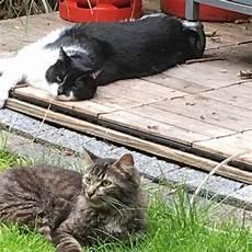 Kater Bringt Lebende M 228 Use Uns Haus Was Tun Katze Maus