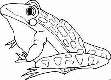frosch malvorlagen xl 28 images frosch ausmalbild 01