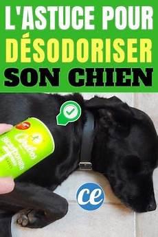 comment d 233 sodoriser chien avec du bicarbonate pour qu