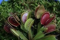 carnivorous plants wego mountain program