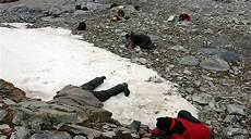 mücke im schlafzimmer 171 belgica antarctica 187 gr 246 sstes landtier der antarktis