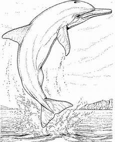 Malvorlagen Delphin Lengkap Delphin Malvorlagen Pinteres