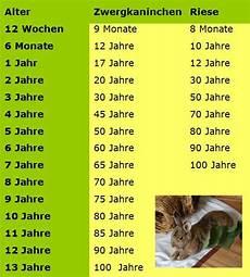 Wie Alt Werden Kaninchen Im Durchschnitt Gesundheit