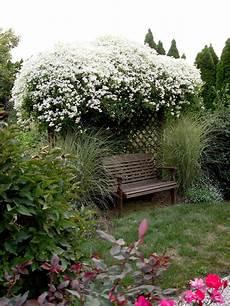 Clematis Sweet Autumn Garden Housecalls