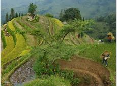 National Geographic, Terraces, Farm, Peasants, Rice paddy