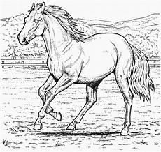 ausmalbilder pferde zum ausdrucken 771 malvorlage alle