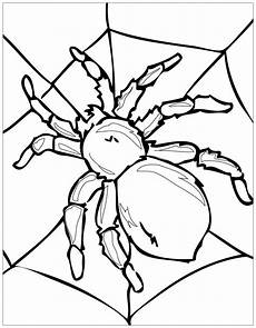 insects to insects coloring pages