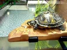 tortue eau douce aquarium tortue d eau caroline et repas
