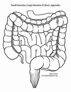 small intestine drawing at getdrawings com free for personal use small intestine drawing of