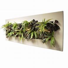cadre mural vegetal tableau v 233 g 233 tal wallflower kyoto blanc l cadre v 233 g 233 tal