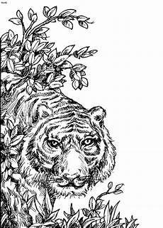 animals colouring pages for adults 16985 98 best images about animals coloring pages on coloring coloring books and