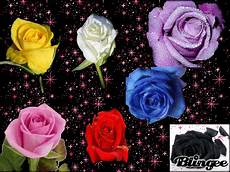 Signification Des Couleurs Des Roses Je Ne Suis Pas Un Ange