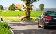 Wildunfall Mit Auto Was Tun Versicherung Autozeitung De