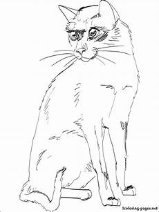 Ausmalbilder Siamkatze Siamese Cat Coloring Page Coloring Pages