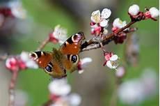 Malvorlagen Insekten Um Zahl Landlebender Insekten Binnen 30 Jahren Um Fast Ein