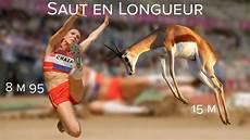 record du monde du saut en longueur photo saut en longueur les springboks m 233 daille d or