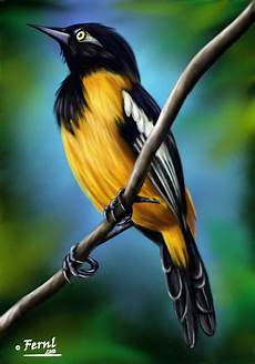 simbolos naturales del estado cojedes venezuela el turpial imagui