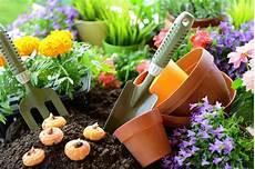 gladiolien 187 wann ist die beste pflanzzeit