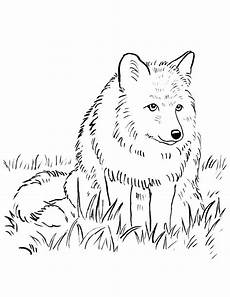 Arctic Fox Coloring Sheet Arctic Fox Coloring Page At Getcolorings Free