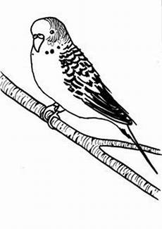 Ausmalbilder Wellensittich Ausdrucken Birds Coloring On Coloring Pages Coloring For