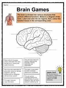 29 brain parts and functions worksheet notutahituq worksheet information