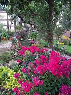 blumenhof neubokel beetpflanzen balkonblumen