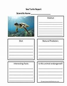 animal worksheets for high school 14306 sea turtle fill in the blank one page animal report animal habitats turtle facts writing