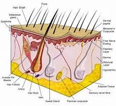 Smart Ebook Anatomi Dan Fisiologi Kulit