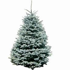 weihnachtsbaum online weihnachtsbaum online g 252 nstig bestellen mit gutschein 35