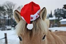 weihnachtspferd foto bild tiere haustiere pferde