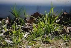 Rasenpflege Nach Dem Winter - rasenpflege im fr 252 hjahr so geht s garten mix