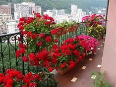 Blumen Sonniger Standort - welche balkonpflanzen f 252 r pralle sonne 10 ideen f 252 r