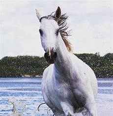 Ausmalbilder Pferde Norweger Norweger Pferde Bilder Bilder Und Spr 252 Che F 252 R Whatsapp