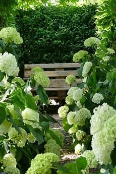 schneeballhortensie annabelle als begleitpflanze f 252 r den