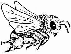 Biene Malvorlagen Xing Pin Auf Bees